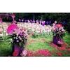 和锦花园餐厅婚宴图片
